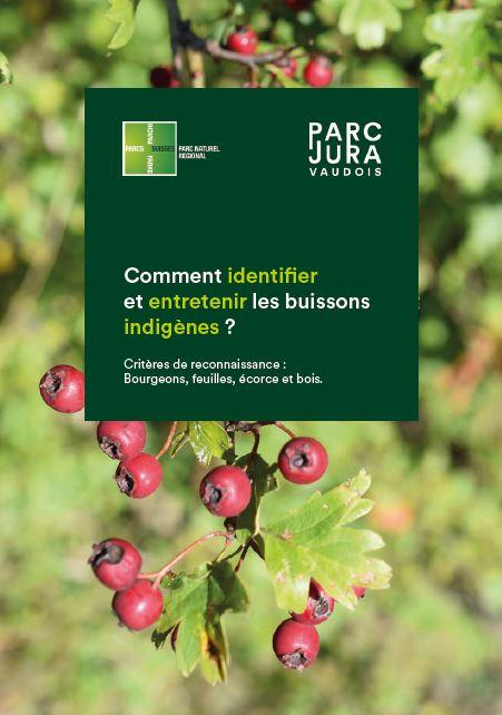 Identifier et entretenir les buissons indigènes